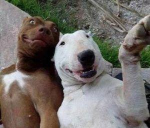 Dia de selfie