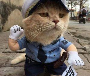 Gato polícia