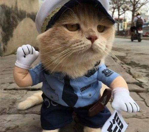 Gato polícia 1
