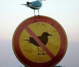 Proibido parar..