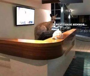 recepcionistas no hoteis na austrália