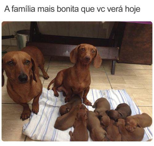 A grande família 1
