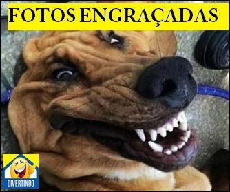 Fotos Engraçadas