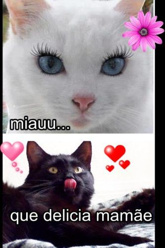 Miauu 1