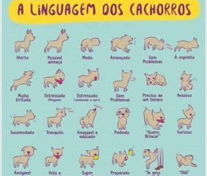 A Linguagem dos cachorros